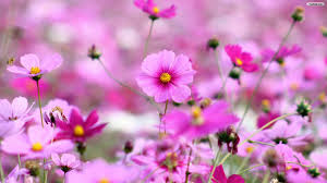 flowers coupon from you flowers coupon wallpaper