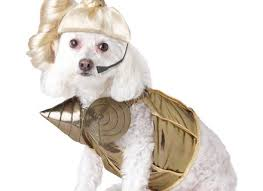 medium dog halloween costumes korrectkritterscom