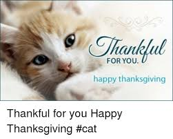 25 best memes about happy thanksgiving cat happy