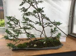 anyone enjoy tiny trees bonsai album on imgur