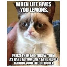 Funny Grumpy Cat Memes - grumpy cat and funny cat memes polyvore amuses me
