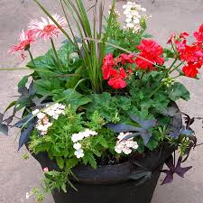 south central gardening container annuals