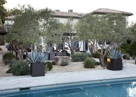 Tuscan Backyard Landscaping Ideas 176 Best Olive Trees Images On Pinterest Olive Tree Gardens And
