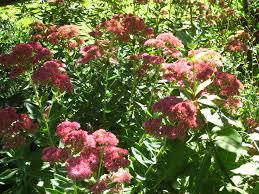 fall colors from lynn u0027s garden