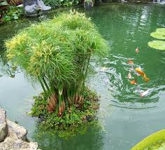 during the summer algae growth can be a huge problem in garden