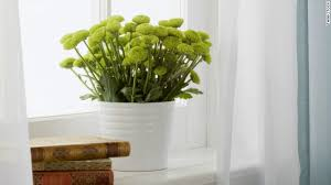 house plants that don t need light a guide to indoor gardening cnn