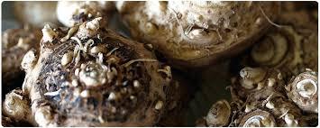 calla bulbs plant calla bulbs calla bulbs buy online at farmer when