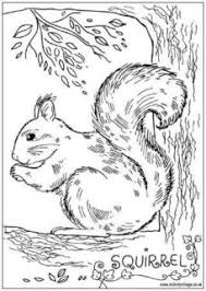 coloring pages of animals that migrate free coloring pages of animals hibernating coloring pages coloring