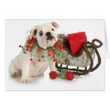 bulldog cards invitations zazzle co uk