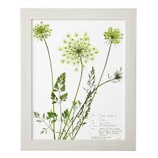 western fern pressed botanical print fern prints uncommongoods