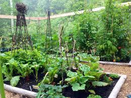 christine u0027s first veggie garden in quebec finegardening