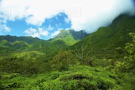 Hawaii Mountains images Lush growth on the mountains and valleys on an hawaiian island jpg