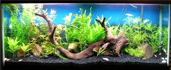 55 gallon aquarium light show me your 55 gallon planted tank pets pinterest 55 gallon