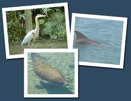 Florida wildlife tours images Florida boat tours dolphin sightseeing boat tour scenic south jpg