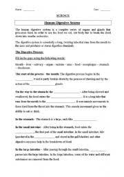 digestive system worksheets free worksheets library download and