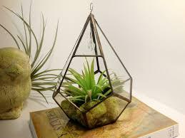decor hanging glass globe terrarium hanging glass air plant