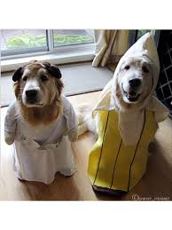 Doggy Halloween Costumes 53 Funny Dog Halloween Costumes Cute Ideas Pet Costumes