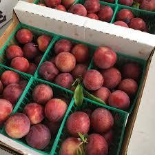 cherry plums information recipes and facts
