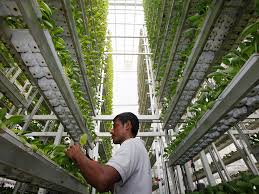 an entire african town with a futuristic vertical farm