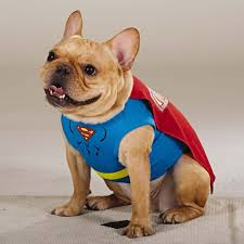 dog halloween costumes images 47 halloween costumes for your dog thefashionspot