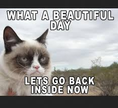 New Grumpy Cat Meme - awesome 268 best tardar sauce aka grumpy cat images on pinterest