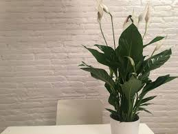 Office Plants 8 Low Maintenance Indoor Plants For Your Office Eco Warrior Princess