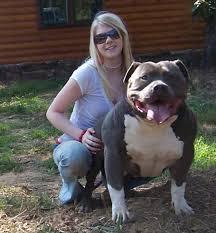 american pitbull terrier kennels usa muglestons pitbull farm pitbulls for sale pit bulls for sale