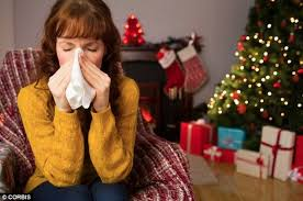 how christmas trees can cause hayfever hell daily mail online