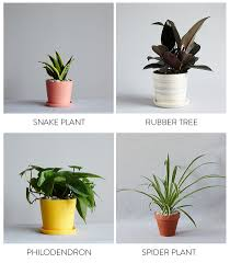 the best indoor plants the best plants for bedrooms and bathrooms with the sill plants