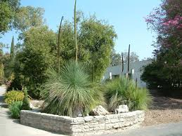ornamental grasses clumping plants