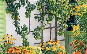 Planting Fruit Trees In Backyard Plant Fruit Trees To Make Your Garden Complete Telegraph
