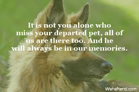sympathy for loss of dog sympathy messages for loss of pet