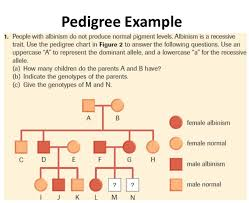 Pedigree Chart For Color Blindness Lab Biology Ca Assignments Mr Scheuch U0027s Science Site 2017 18