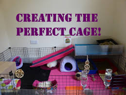 your guinea pig u0027s home 5 top tips for the perfect cage youtube