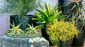 cool container gardens sunset