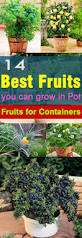 best fruits to grow in pots gardens container gardening and plants