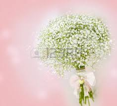 baby s breath bouquets white baby breath flowers stock photos royalty free business images