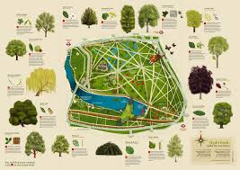hyde park walks for tree royal parks foundation