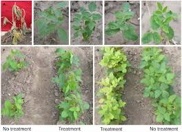 frontiers co expression of g2 epsps and glyphosate