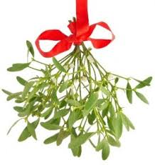 christmas plants great indoor decorative plants for christmas virginia green lawn