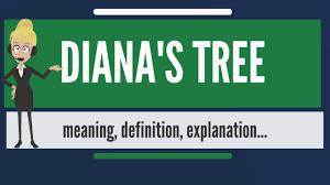 what is diana u0027s tree what does diana u0027s tree mean diana u0027s tree