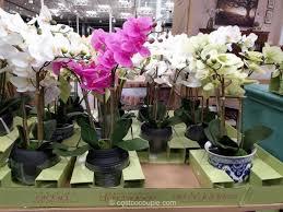 artificial orchids beaumont designs artificial orchid