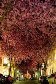 what are some exles of unique type of trees or plants updated