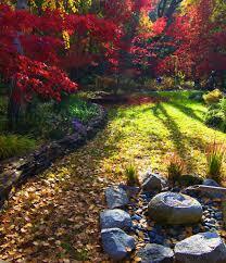 reader photos pauline u0027s garden in california in full fall color