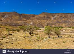 desert like landscape with sparse tree growth and eroded