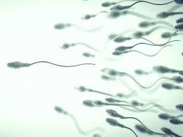 stress pattern sperm adalah sperm morphology what is it and how does it affect fertility