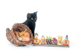 5 tips for a safe thanksgiving with cats catster