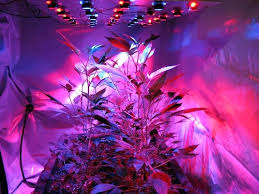 best led weed grow light led lights for weed growing full spectrum grow light medicinal
