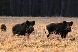 baltic wildlife about latvia mammals