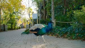 Botanical Garden Cincinnati Bird Pictures View Images Of Cincinnati Zoo And Botanical Garden